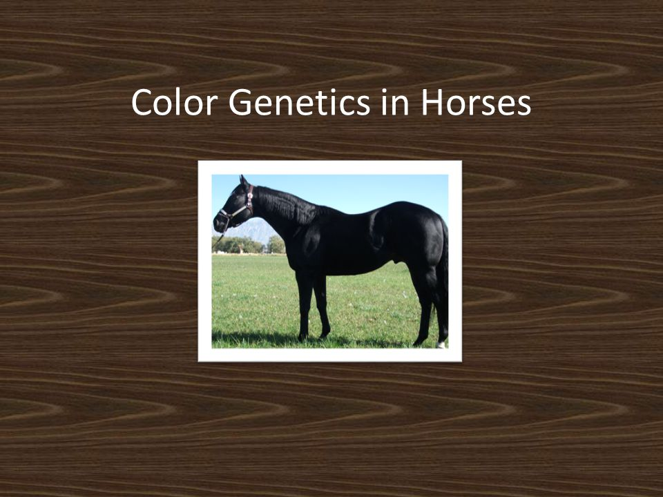 Color Genetics in Horses