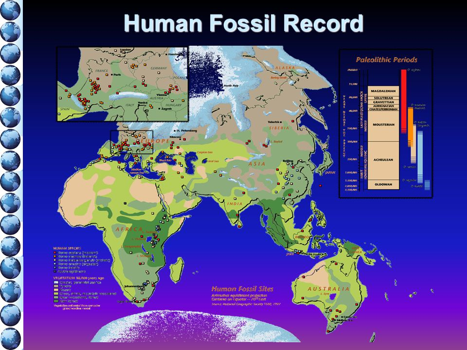 Human Fossil Record