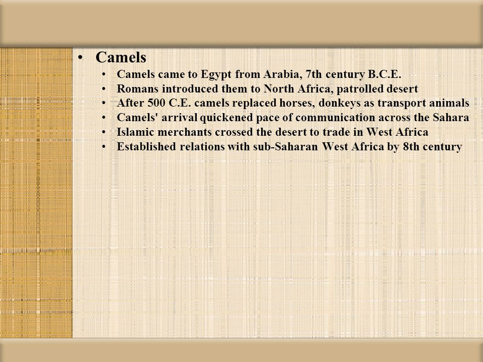 Camels Camels came to Egypt from Arabia, 7th century B.C.E.