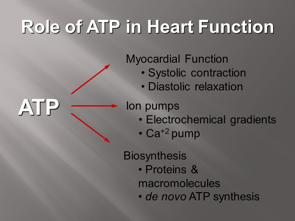Role of ATP in Heart Function