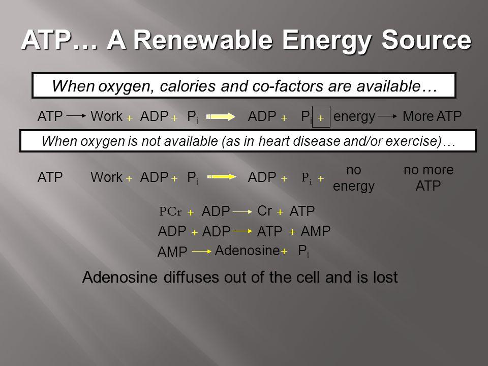 ATP… A Renewable Energy Source