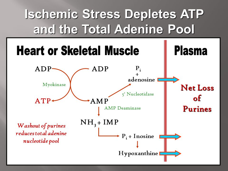 Ischemic Stress Depletes ATP and the Total Adenine Pool