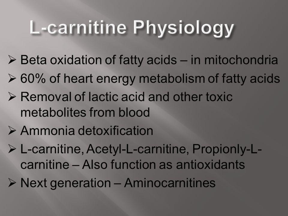 L-carnitine Physiology