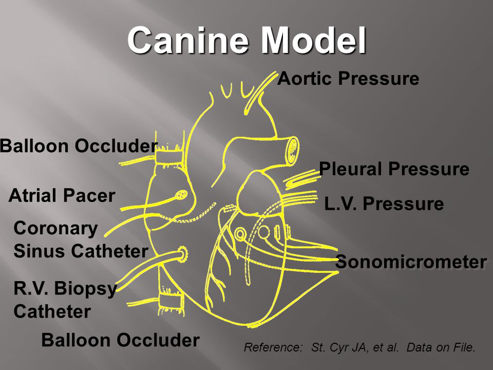 Canine Model Aortic Pressure Balloon Occluder Pleural Pressure
