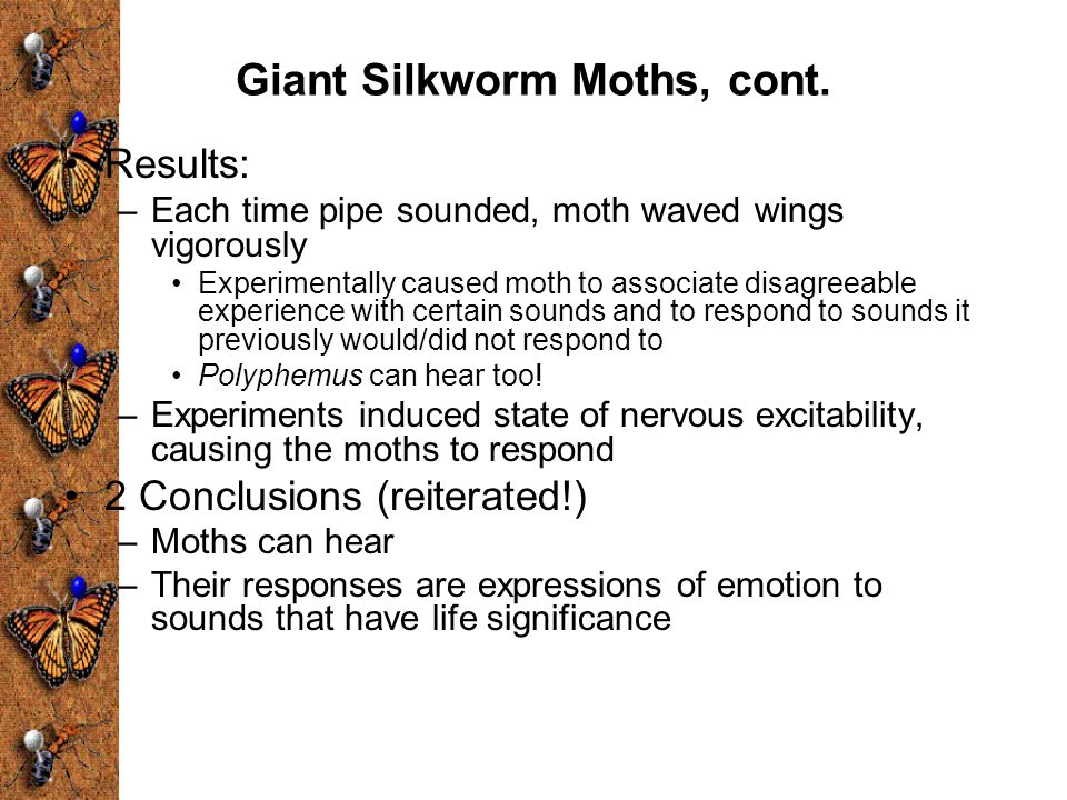 Giant Silkworm Moths, cont.