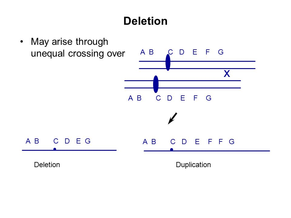 x Deletion May arise through unequal crossing over A B C D E F G