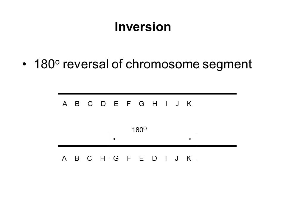 180o reversal of chromosome segment