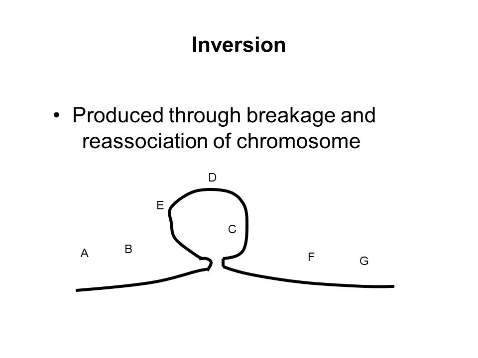 Produced through breakage and reassociation of chromosome