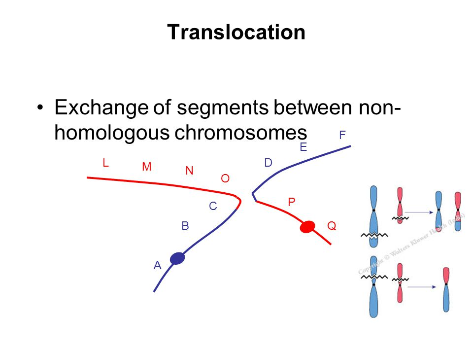 Exchange of segments between non-homologous chromosomes
