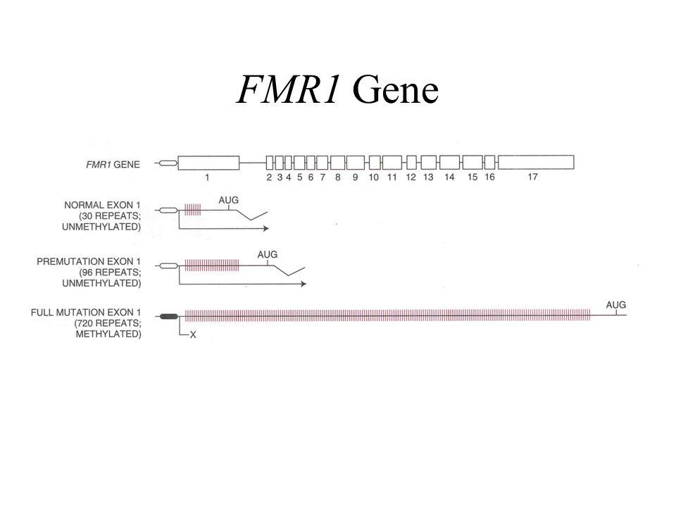FMR1 Gene