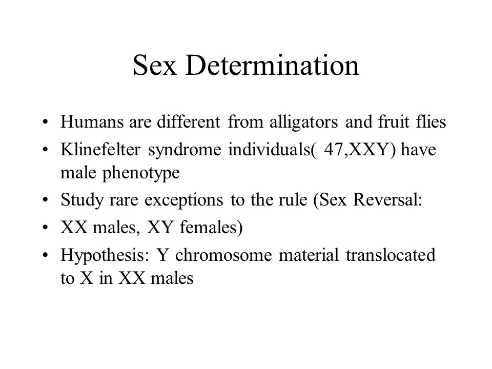 Sex Determination Humans are different from alligators and fruit flies