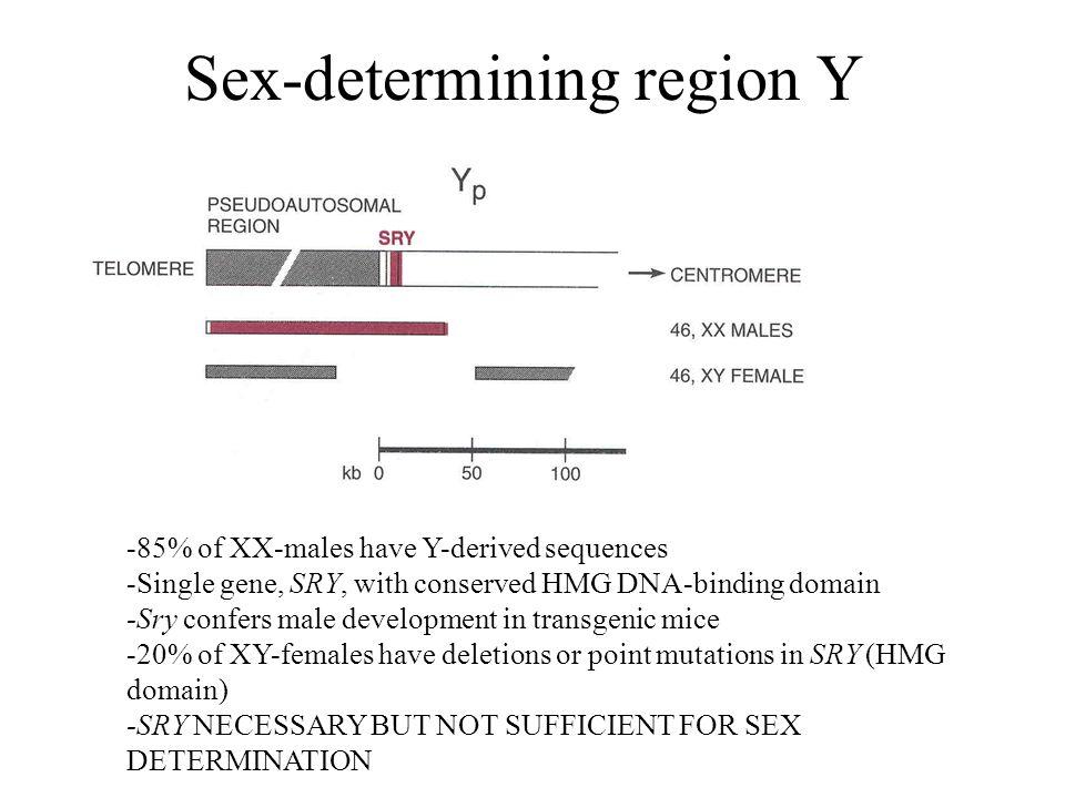 Sex-determining region Y