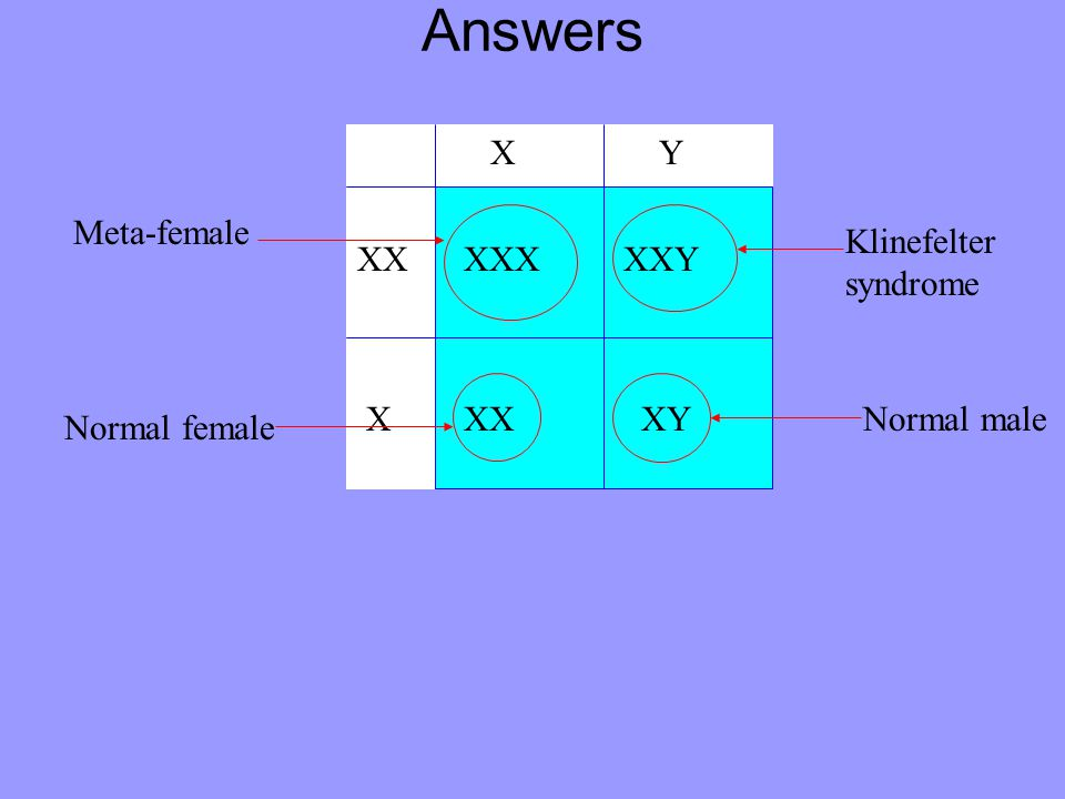 Answers X Y Meta-female Klinefelter syndrome XX XXX XXY X XX XY