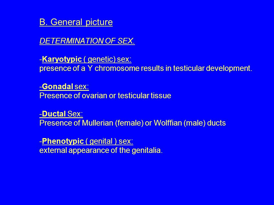 B. General picture DETERMINATION OF SEX