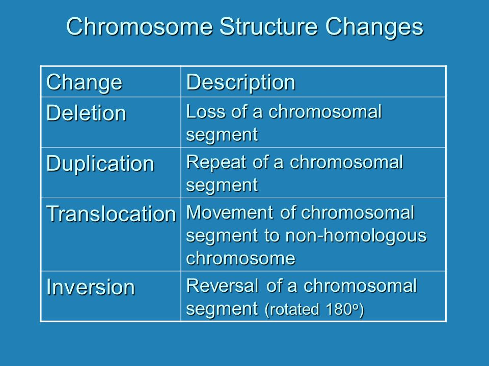 Chromosome Structure Changes