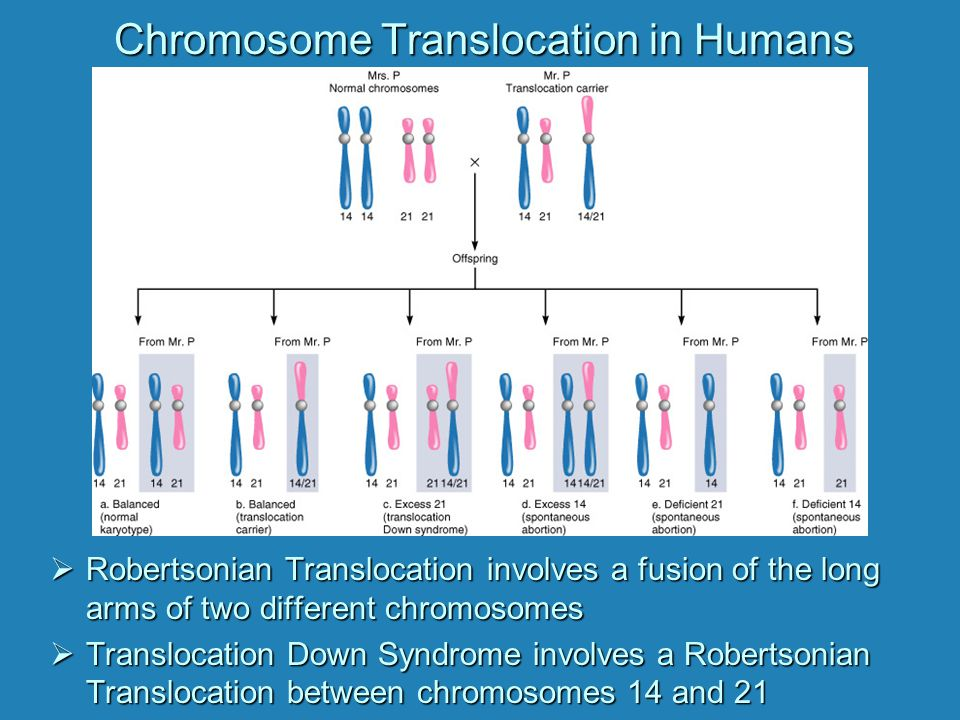 Chromosome Translocation in Humans