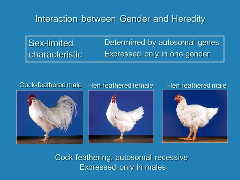 Interaction between Gender and Heredity