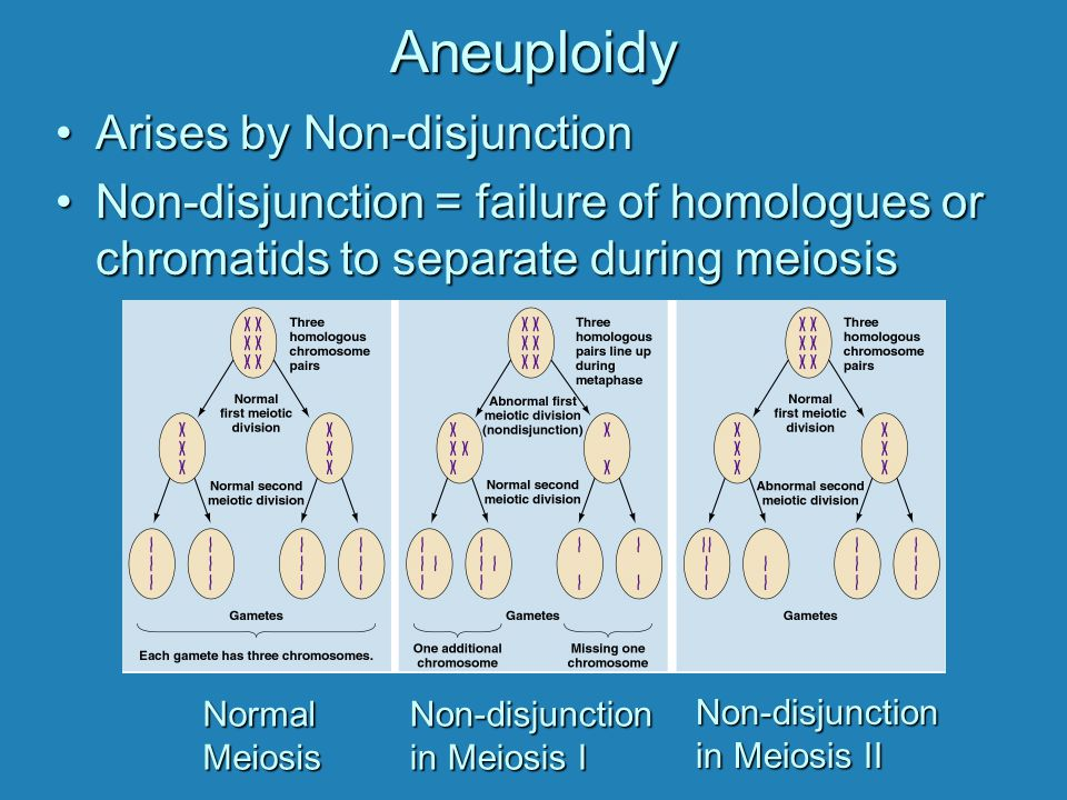 Aneuploidy Arises by Non-disjunction