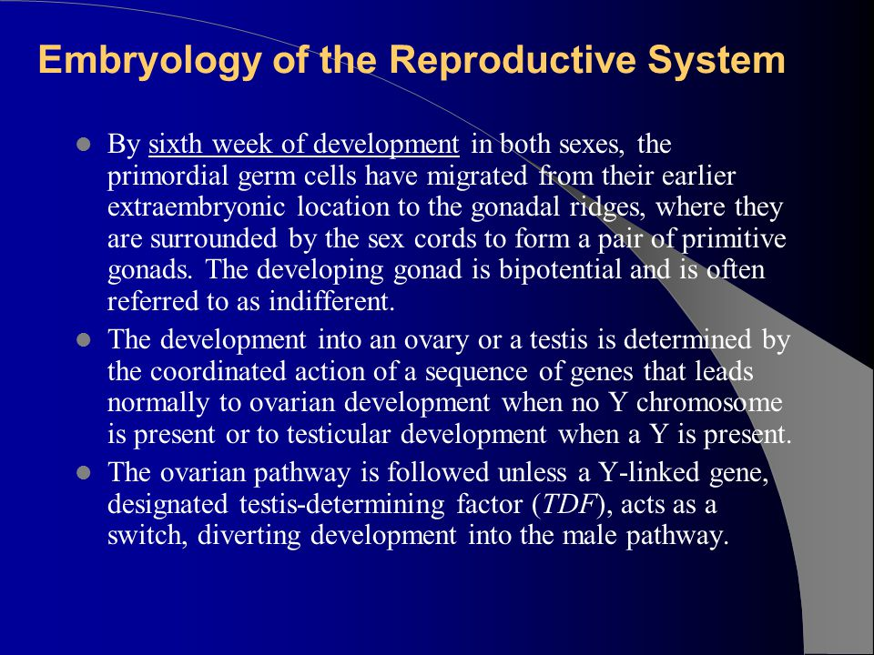 Embryology of the Reproductive System
