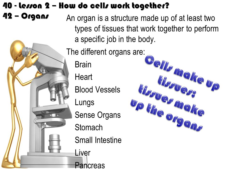 tissues make up the organs