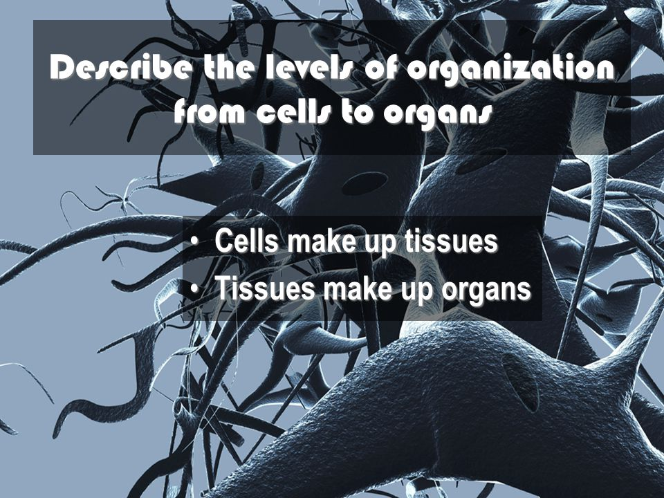 Describe the levels of organization from cells to organs