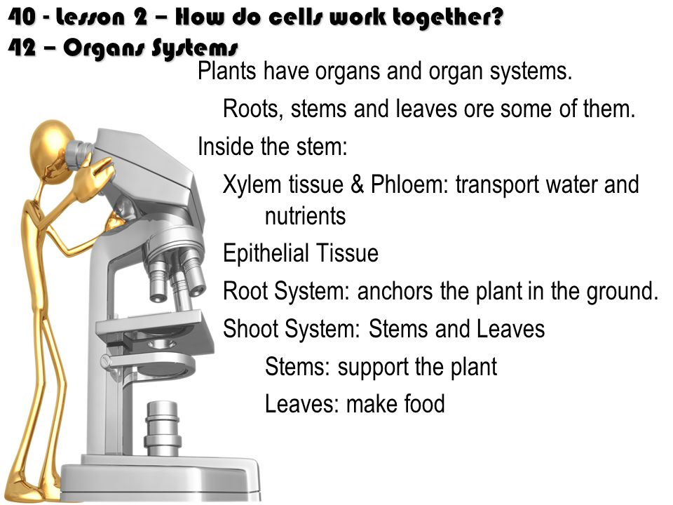 40 - Lesson 2 – How do cells work together 42 – Organs Systems