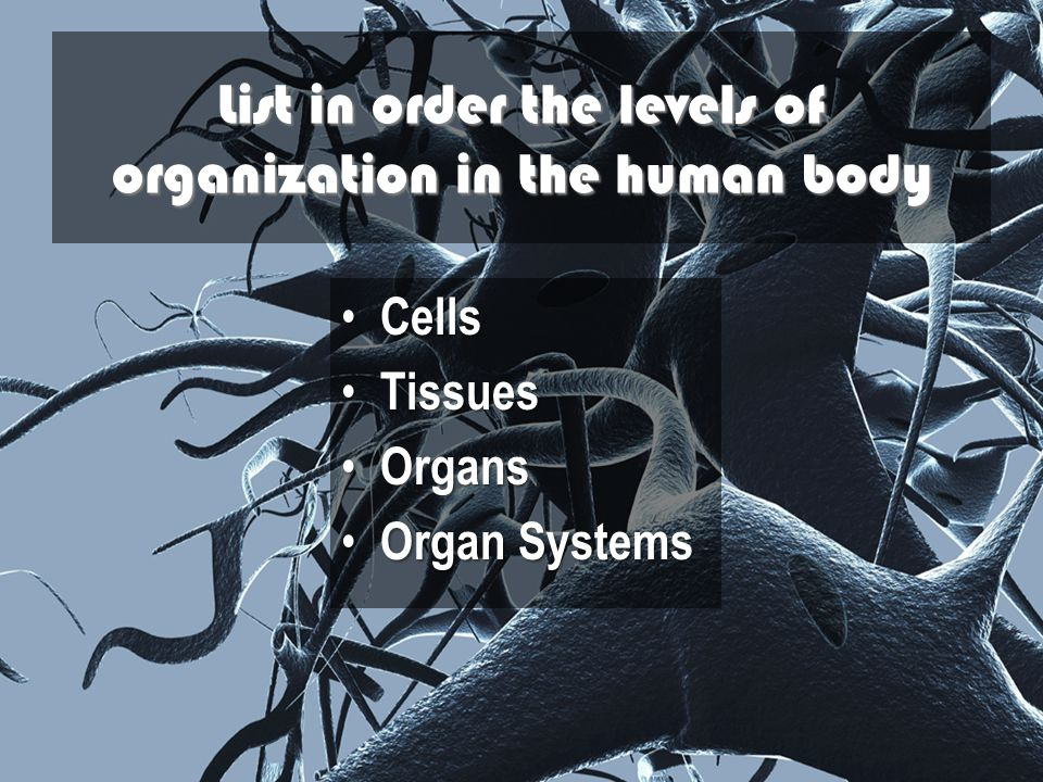 List in order the levels of organization in the human body
