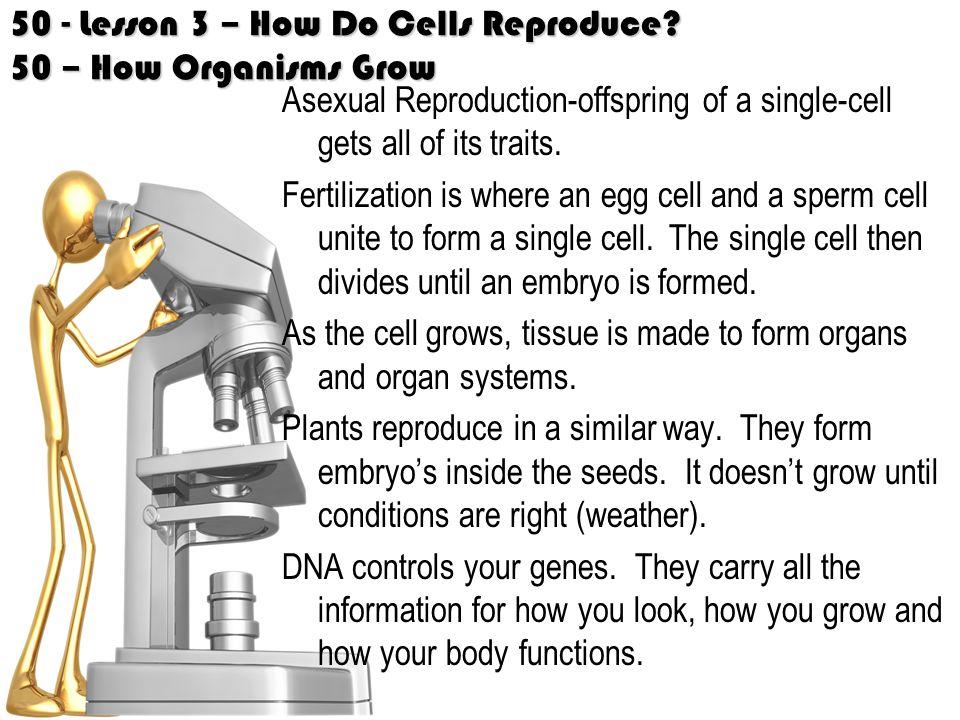 50 - Lesson 3 – How Do Cells Reproduce 50 – How Organisms Grow
