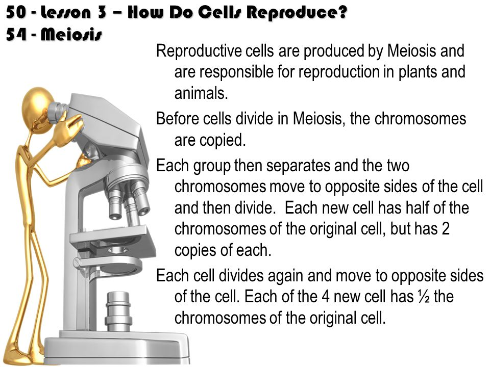 50 - Lesson 3 – How Do Cells Reproduce 54 - Meiosis