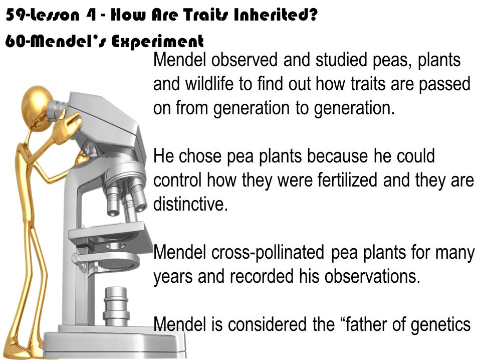 Mendel is considered the father of genetics