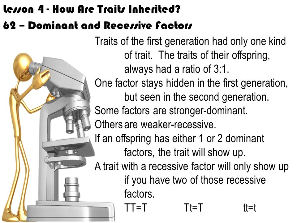 Lesson 4 - How Are Traits Inherited