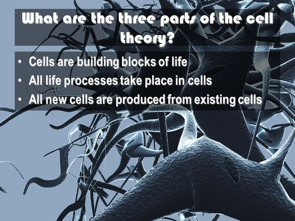What are the three parts of the cell theory