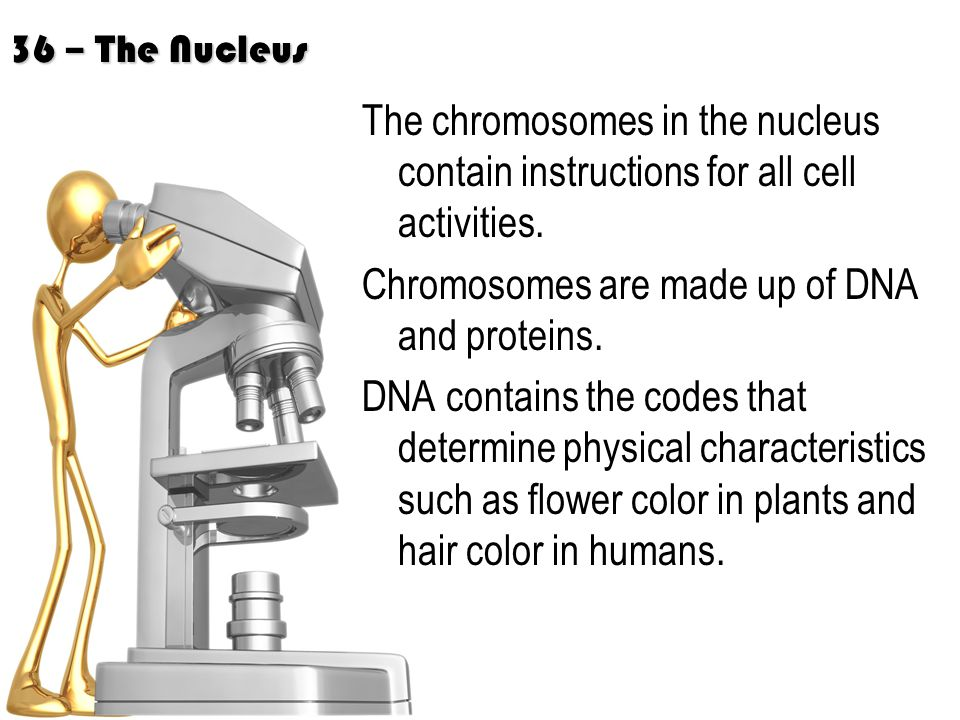 Chromosomes are made up of DNA and proteins.
