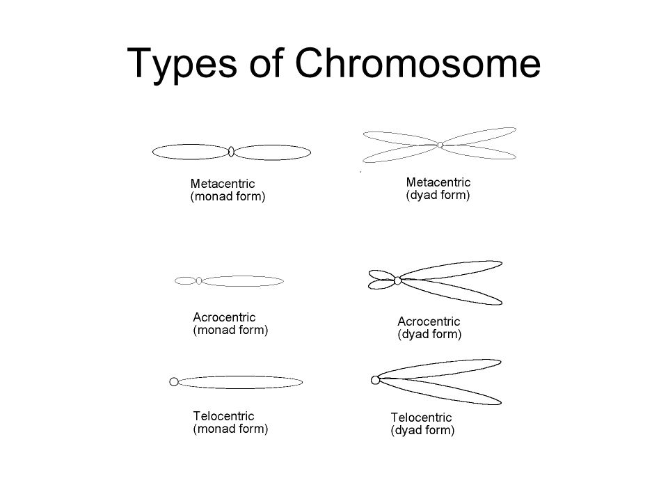 Types of Chromosome