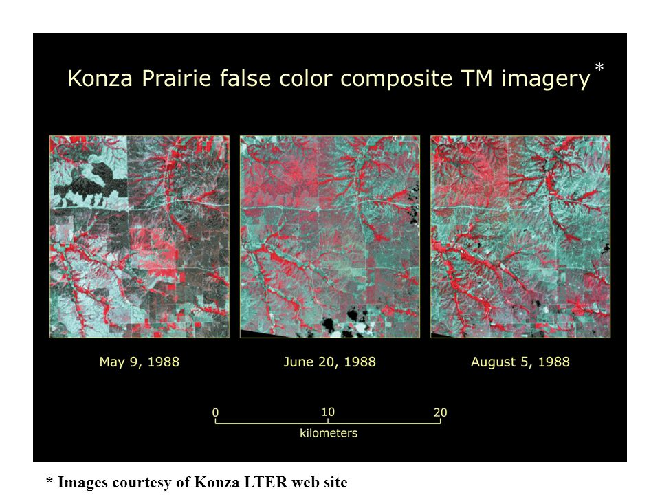 Konza Prairie false color composite TM imagery