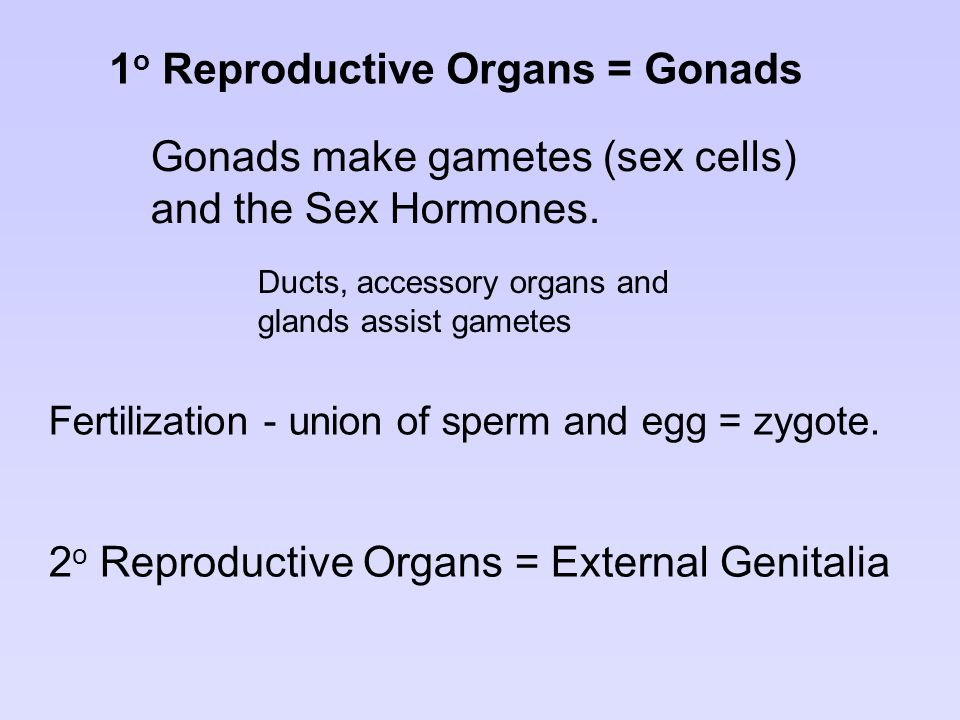 1o Reproductive Organs = Gonads