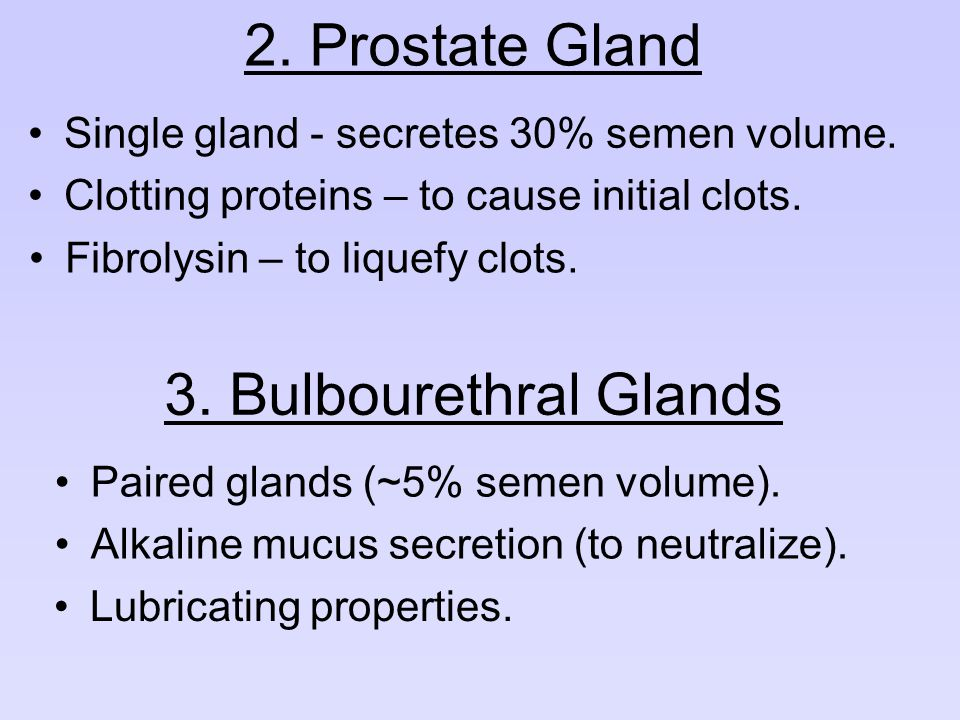 2. Prostate Gland 3. Bulbourethral Glands