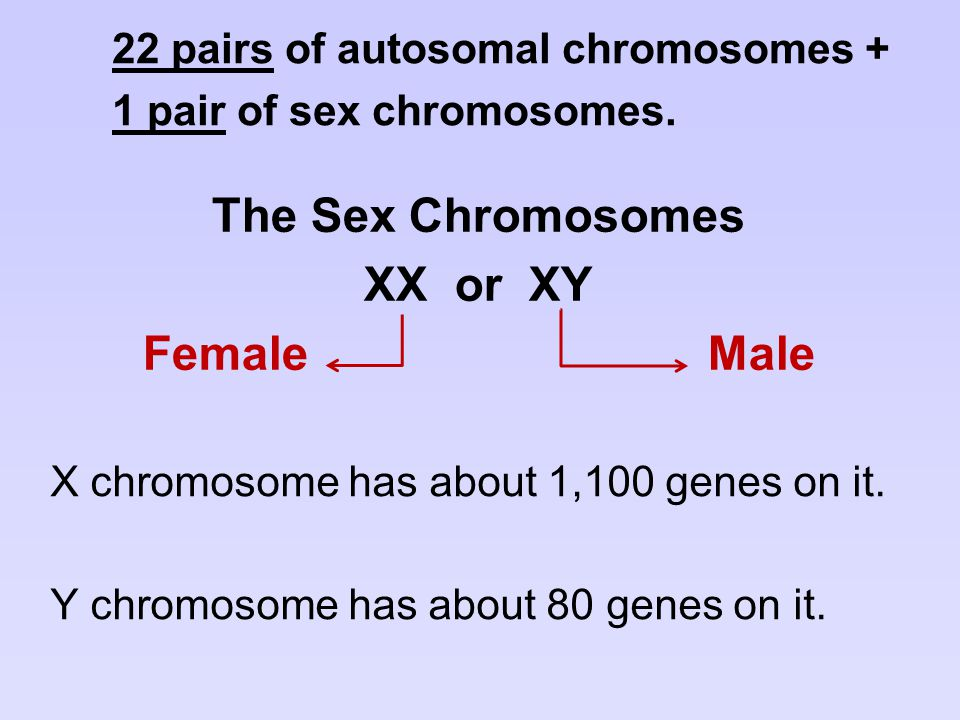 The Sex Chromosomes XX or XY Female Male