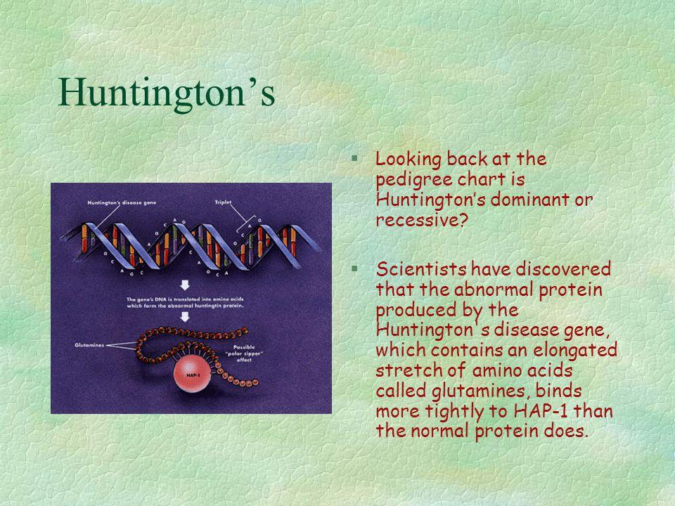 Huntington's Looking back at the pedigree chart is Huntington's dominant or recessive
