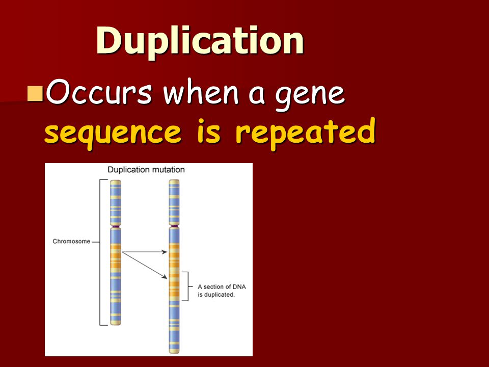 Duplication Occurs when a gene sequence is repeated 11