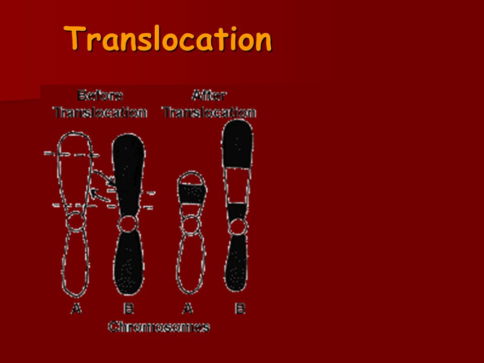 Translocation 13