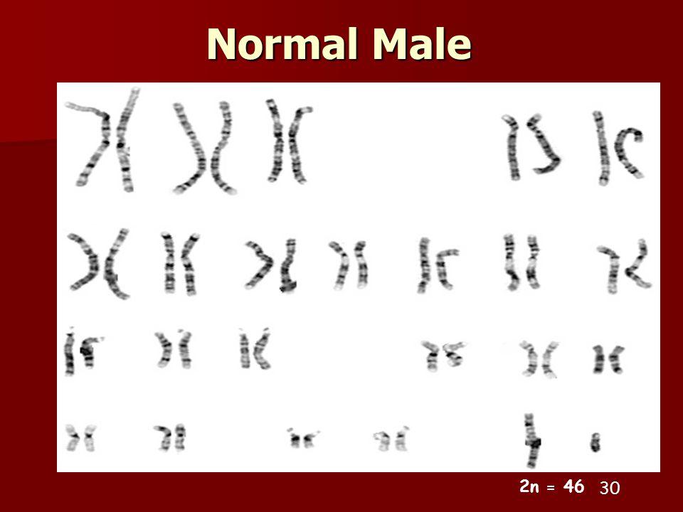 Normal Male 2n = 46 30 30