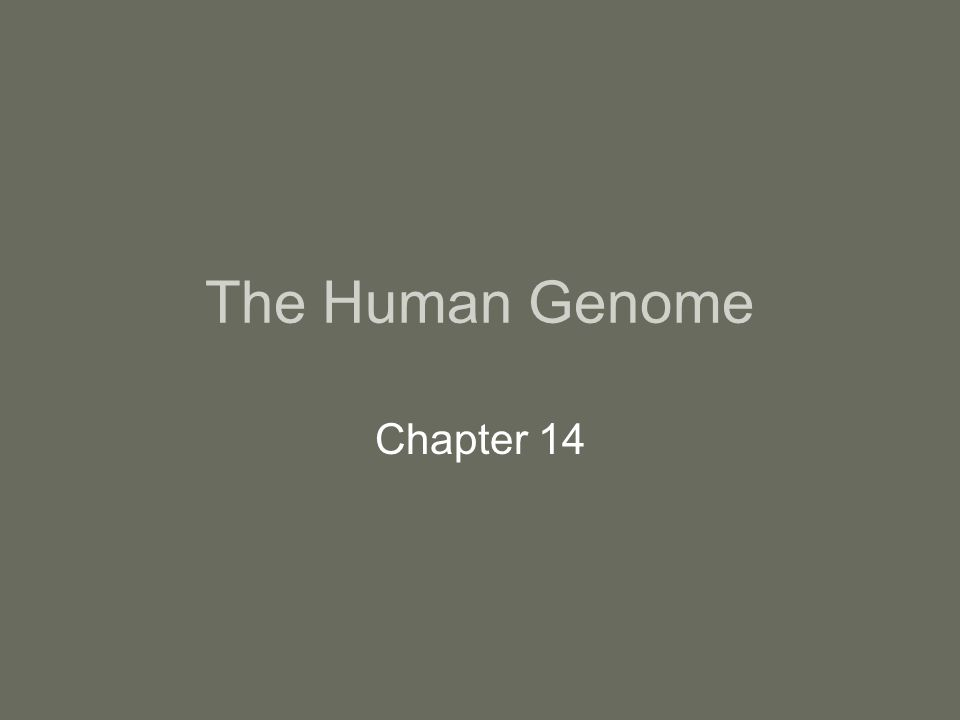 The Human Genome Chapter 14