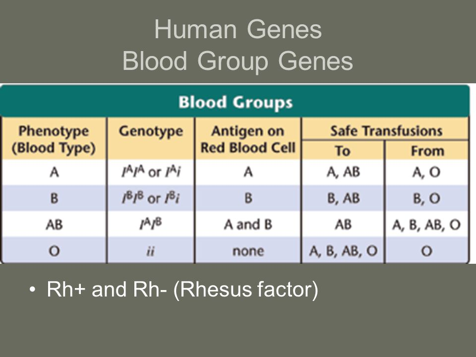 Human Genes Blood Group Genes
