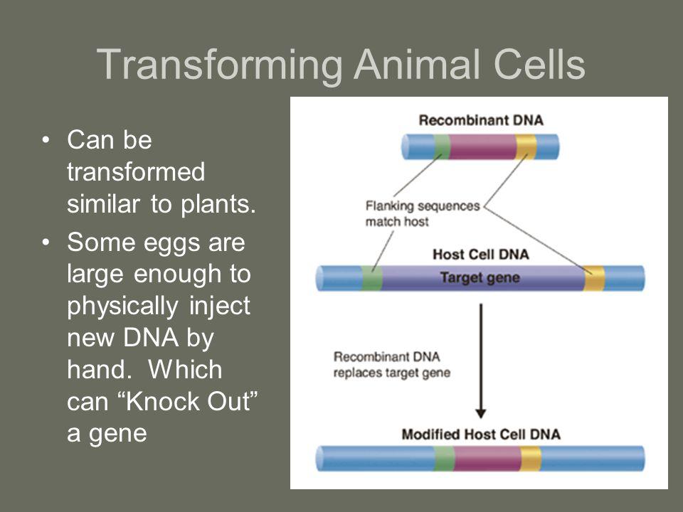 Transforming Animal Cells