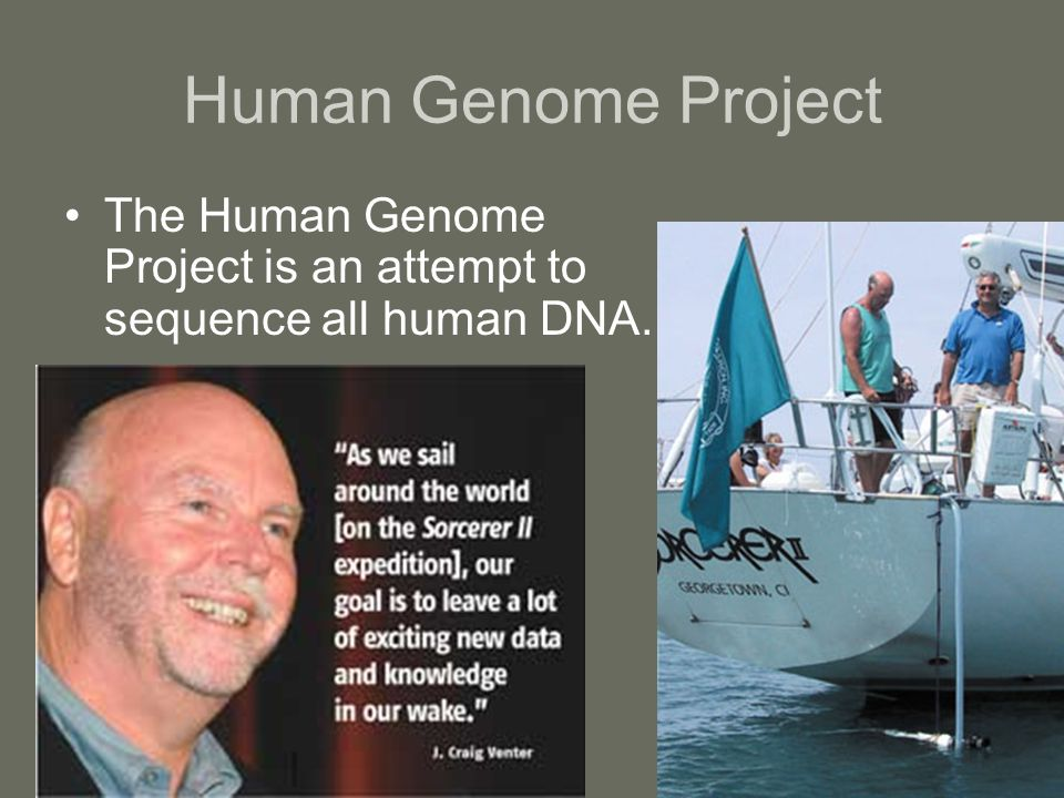 Human Genome Project The Human Genome Project is an attempt to sequence all human DNA.