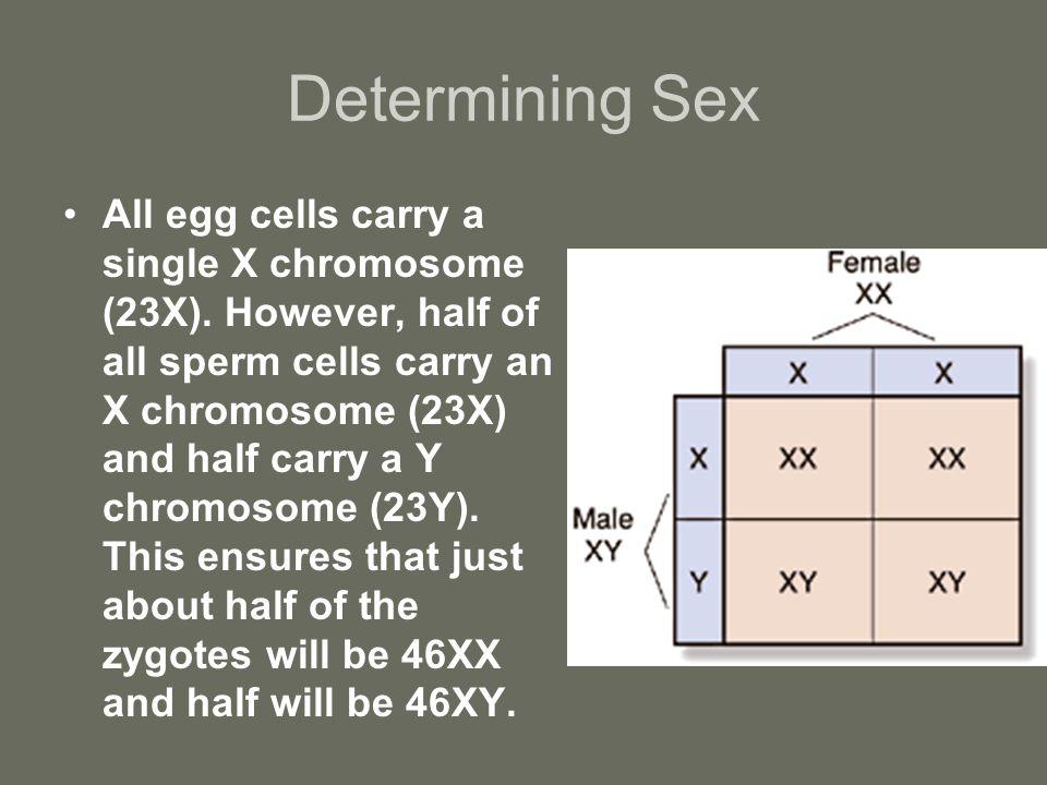 Determining Sex