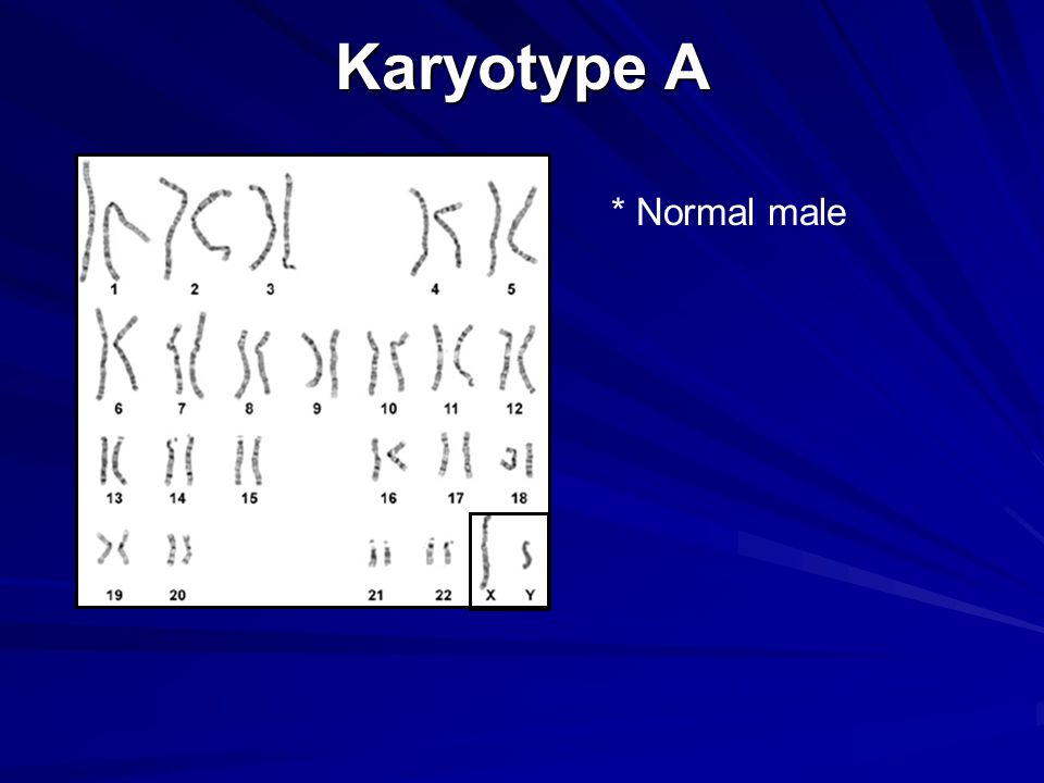 Karyotype A * Normal male