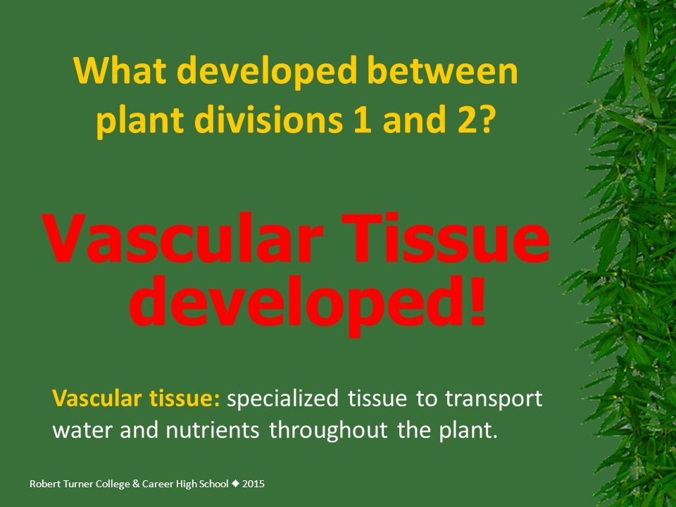 What developed between plant divisions 1 and 2