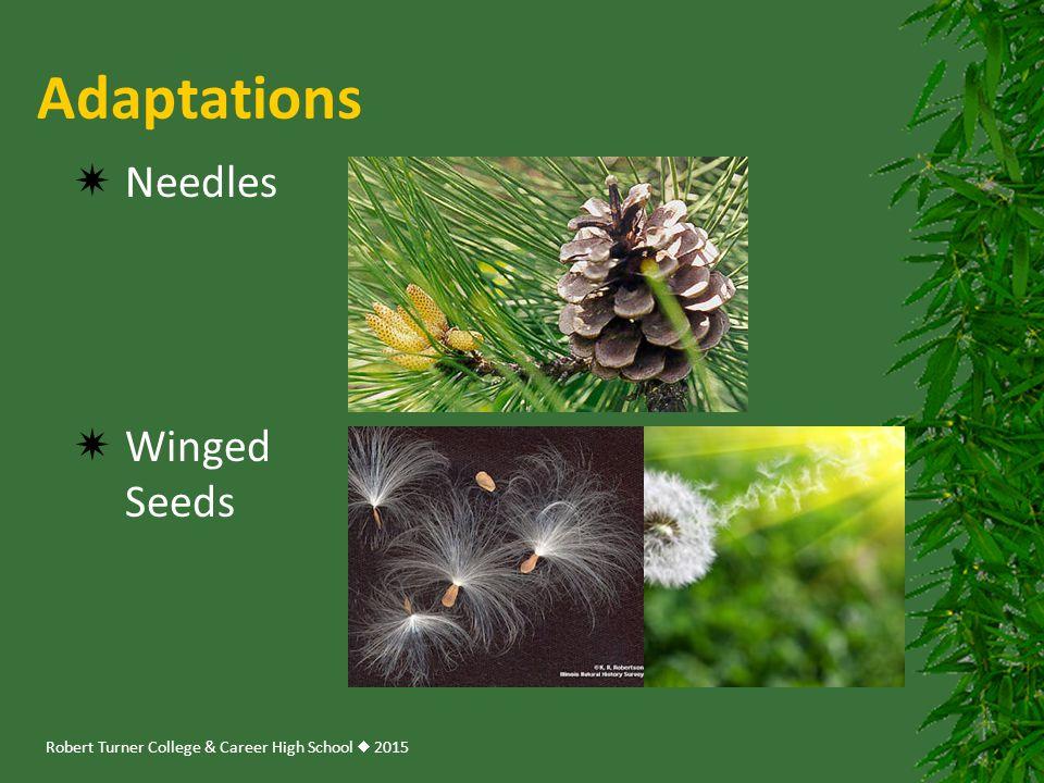 Adaptations Needles Winged Seeds